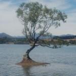 Wanaka Lake albero solitario