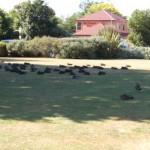 Amiche Loredana nel parco di Te Anau
