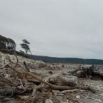 Spiaggia con i tronchi portati dai fiumi 1