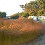 Waipu Cove 6